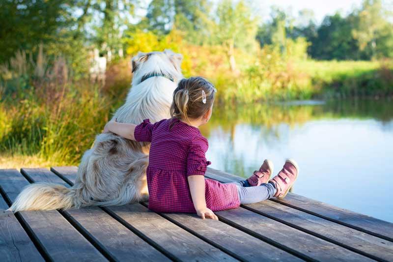 Australian Shepherd als Familienhund