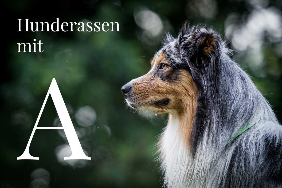 Hunderassen mit A
