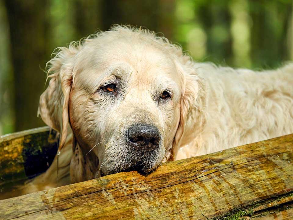 Älteste Hund der Welt
