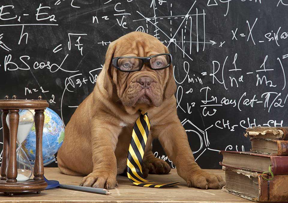 Hundealter berechnen