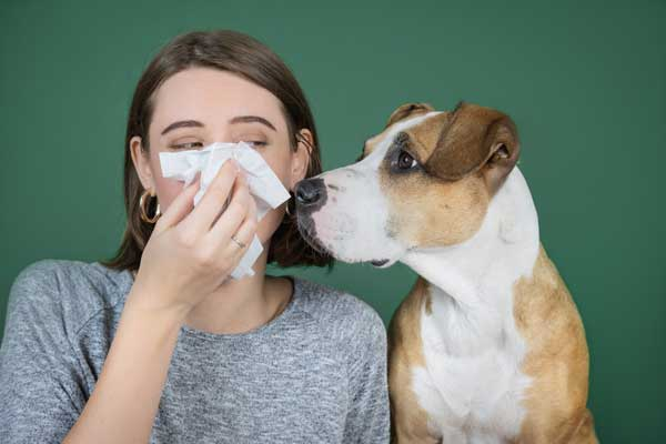 kleine hunderassen die nicht haaren Hunde Allergie