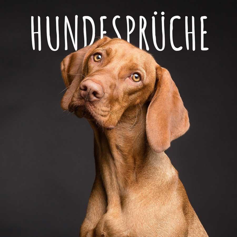 Bild mit Hundesprüchen