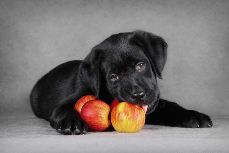 Welpe mit Äpfeln