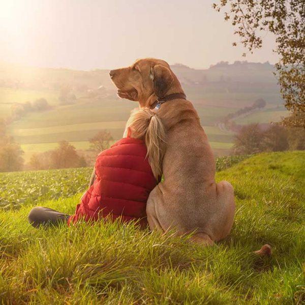 Broholmer riesen Hund mit Mädchen
