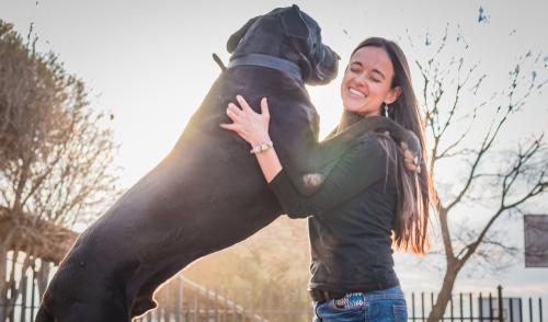 Deutsche Dogge mit einem Mädchen spielen