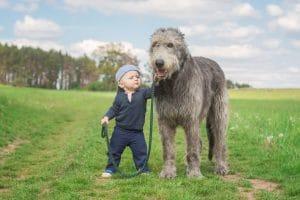 Irischer Wolfshund Reisen
